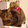 ひさびさの連結猫
