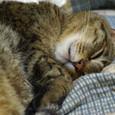 きらの寝顔3