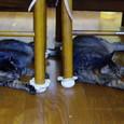 テーブルの下でもシンメトリー親子2