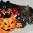 きらちゃんと黒猫とジャックランタン