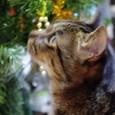 クリスマスツリーとくくる