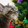 クリスマスツリーときらちゃん3