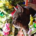 きらのクリスマス2