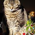 きらのクリスマス3