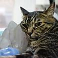 水晶クラスターに顔を乗せるくくる3