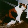 1992~1993 まり 7〜8歳