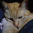 春ちゃんと死産の仔猫