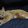 生後1日目の仔猫たち