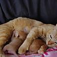 生後5日目の仔猫たち