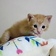 猫ベッドによじ登るひかりちゃん