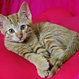 いちごの猫ベッドでくつろぐさくらちゃん
