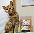 赤ちゃん招き猫とさくらちゃん