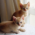 キャットタワーに上れるようになった仔猫たち2
