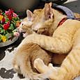仔猫虐待する春ちゃん