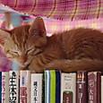 本の上で眠るさくらちゃん